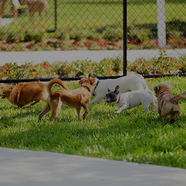 Large Dog Park at Center Court Senior Living Apartments